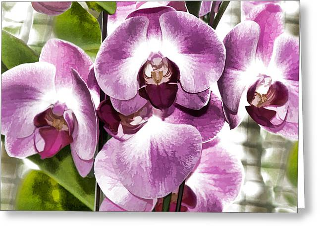 Pastel Orchids Greeting Card