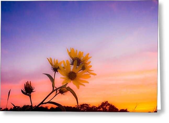 Pastel Palette Greeting Card by Shane Taitt