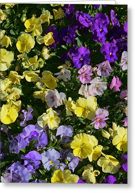 Pastel Pansies Greeting Card