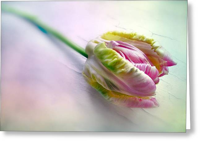 Pastel Parrot Tulip Greeting Card by Jessica Jenney