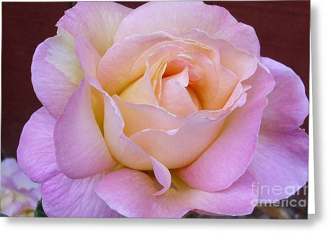 Pastel Rainbow Rose Greeting Card