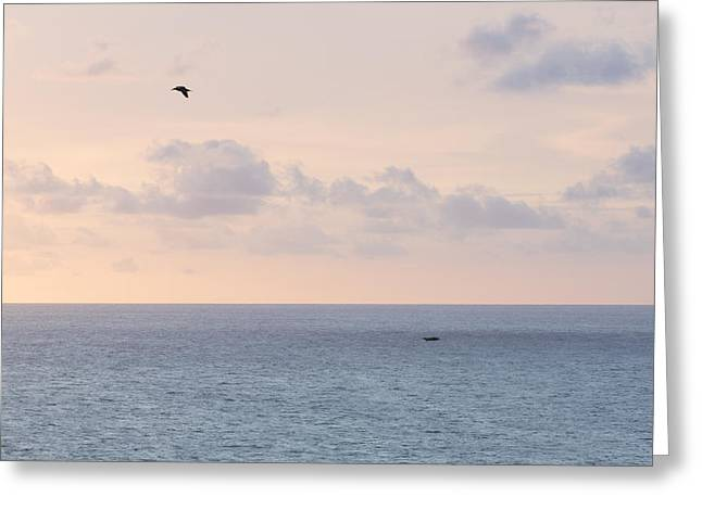Pastel Sunset Sky At The Ocean Seascape With Flying Birds Photo Art Print Greeting Card by Ocean Photos