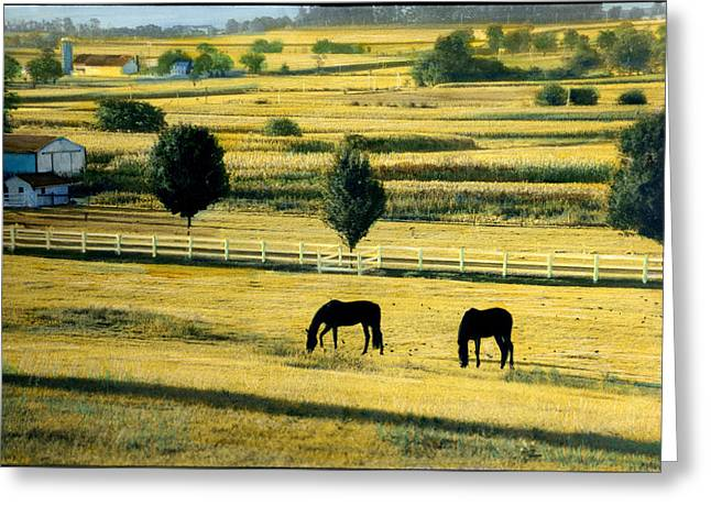 Pastoral Gold Greeting Card