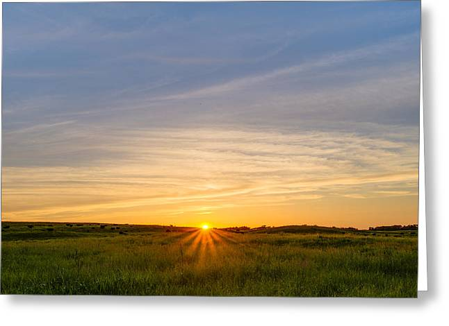 Pasture At Sunset Greeting Card