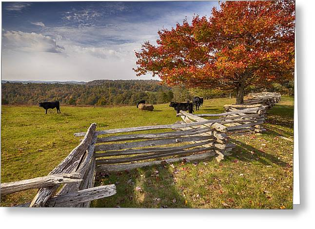 Pasture Fence Greeting Card