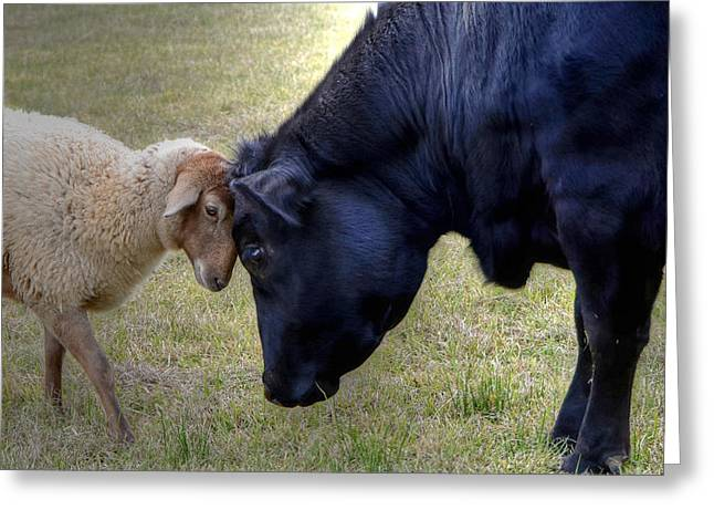 Pasture Pals Greeting Card