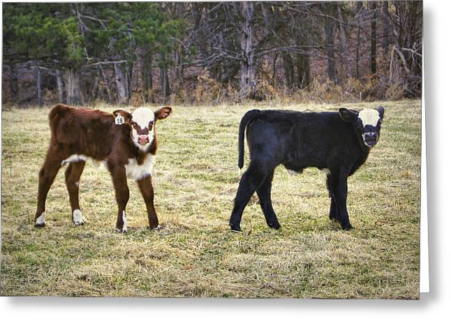 Pasture Pals Greeting Card by Cricket Hackmann
