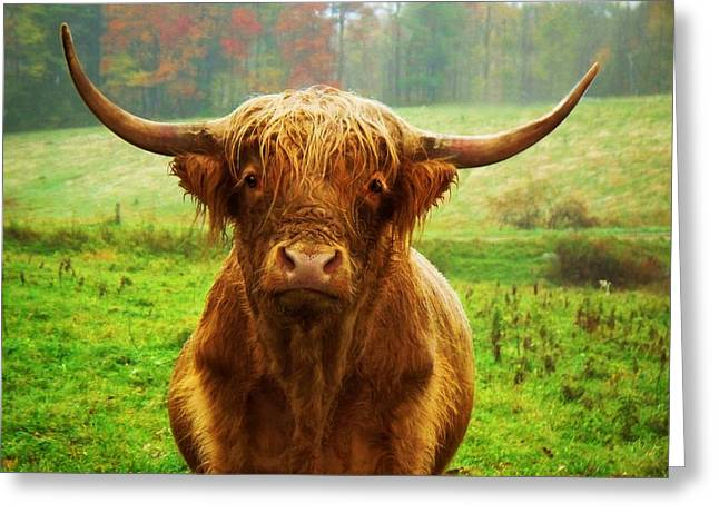 Pasture Portrait Greeting Card