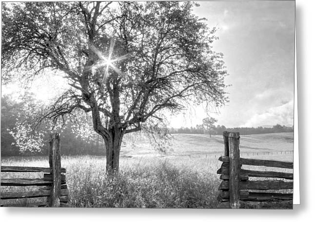Pastures In Black And White Greeting Card