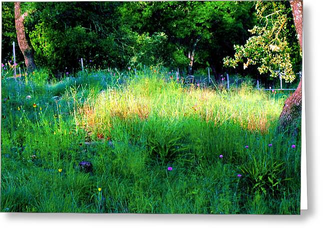 Patch Of Morning Sunlight Wildflowers  Greeting Card by ARTography by Pamela Smale Williams