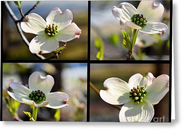 Patched Together Dogwoods Greeting Card