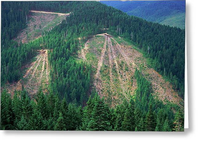 Patches Of Clearcut Mountain Greeting Card
