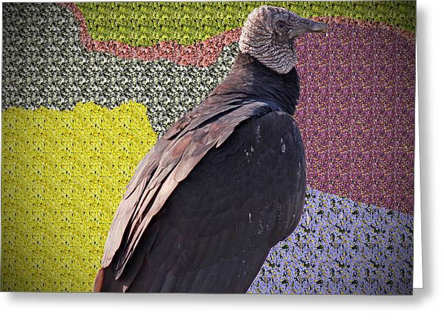 Patchwork Buzzard Greeting Card