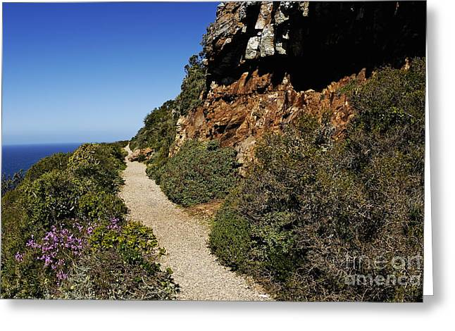 Path At Cape Of Good Hope Greeting Card by Sami Sarkis