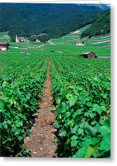 Path In A Vineyard, Valais, Switzerland Greeting Card