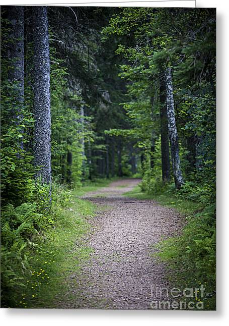 Path In Dark Forest Greeting Card