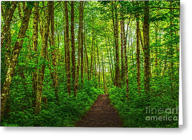 Path In Green Greeting Card by Sonya Lang