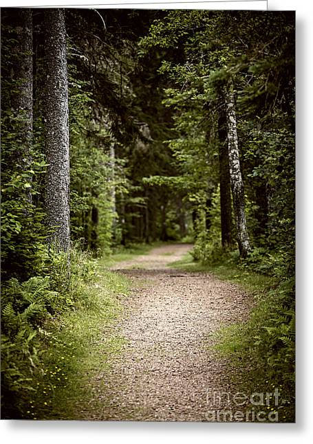 Path In Old Forest Greeting Card by Elena Elisseeva