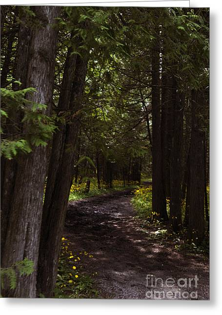 Path In The Dark Woods Greeting Card