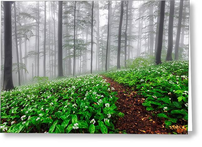 Path In The Mist Greeting Card by Evgeni Dinev