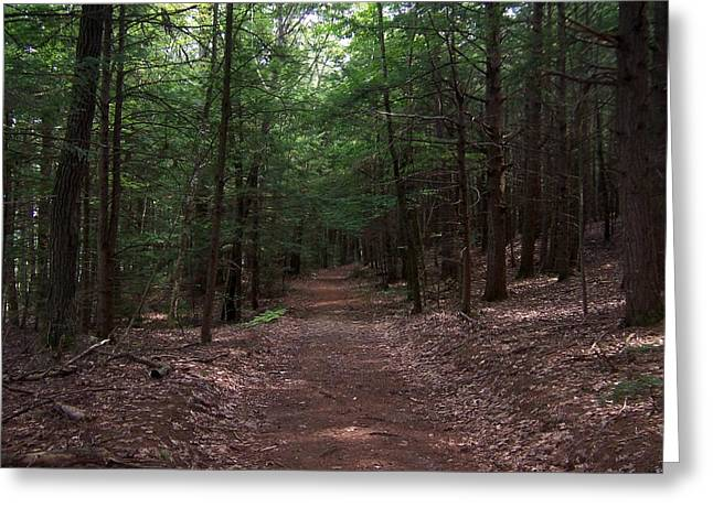 Path In The Woods Greeting Card by Catherine Gagne