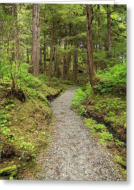 Path Inside Tongass National Forest Greeting Card by Macduff Everton