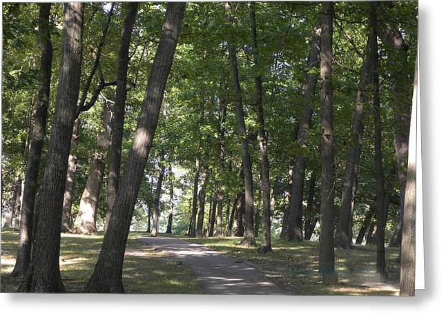 Path Into Woods Greeting Card by Cim Paddock