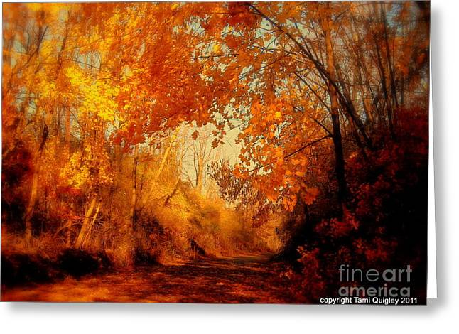 Path Of Gold Greeting Card by Tami Quigley