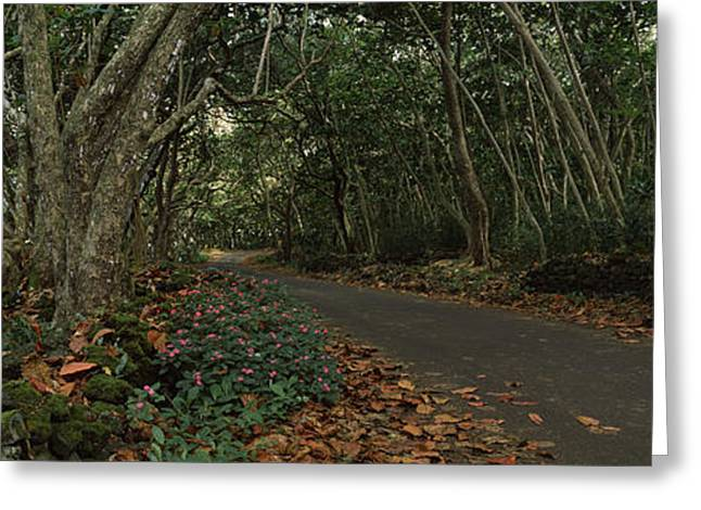 Path Passing Through A Forest, Maui Greeting Card