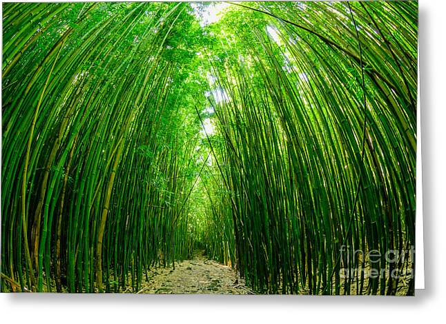 Path Through A Bamboo Forrest On Maui Hawaii Usa Greeting Card