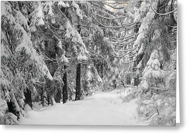 Path Through A Forest In Winter Greeting Card by Panoramic Images