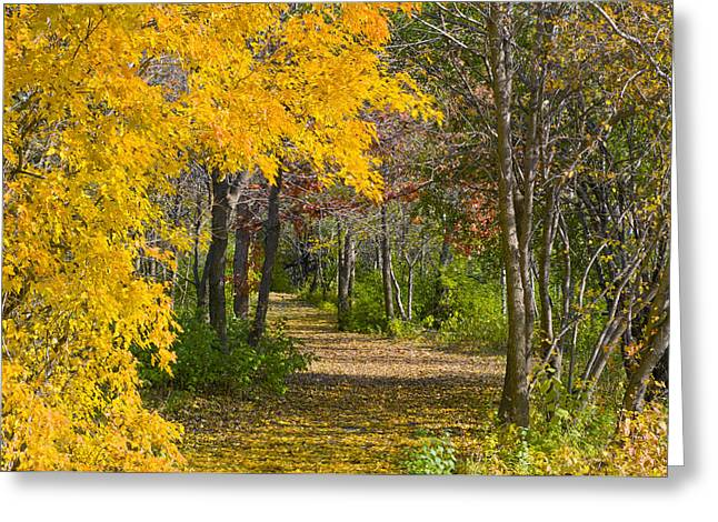 Path Through Autumn Trees Greeting Card