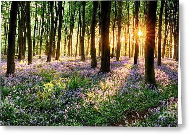 Sunrise Path Through Bluebell Woods Greeting Card by Simon Bratt Photography LRPS