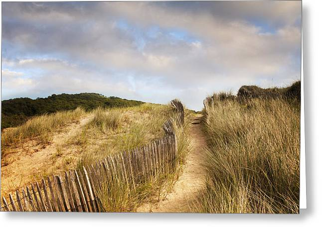 Path Through Dunes Greeting Card