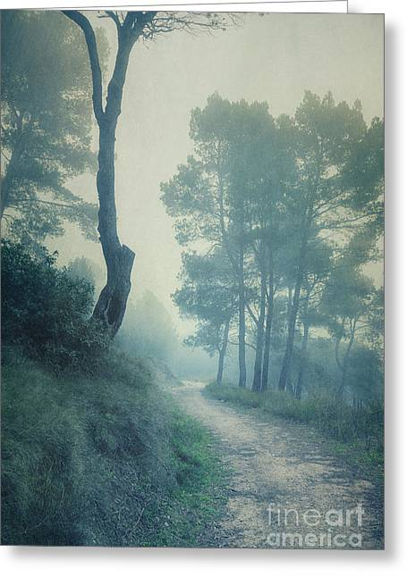 Path Through Pinewood Mist Greeting Card by Paul Grand