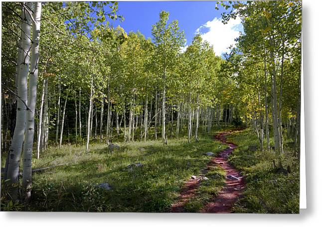 Path Through The Aspens In Colorado Greeting Card