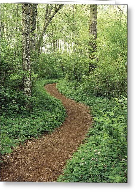 Path Through Woods Greeting Card by Bert Klassen
