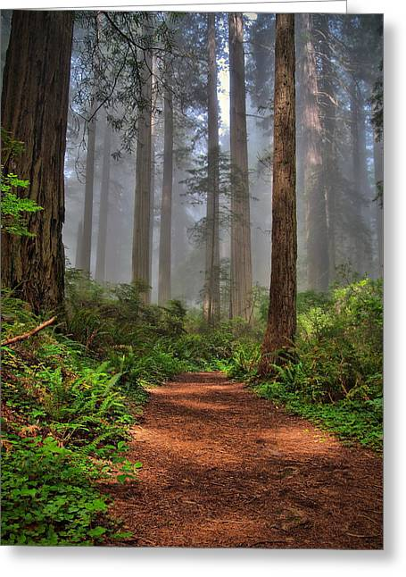 Path Thru The Redwoods Greeting Card