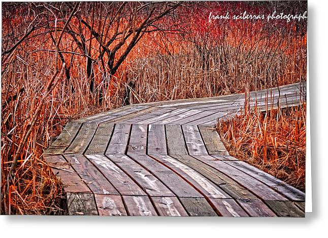 Path To Nature Greeting Card by Frank Sciberras