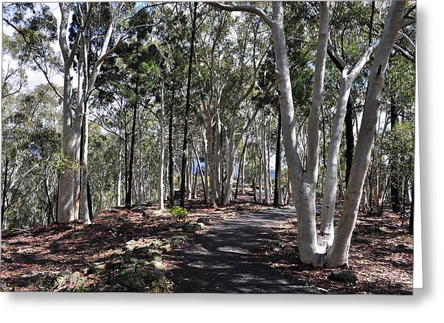 Pathway Among The Gum Trees Greeting Card