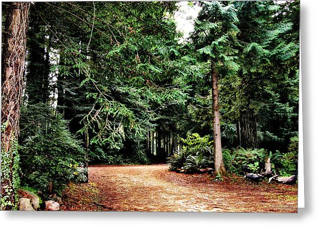 Pathway In The Forest Greeting Card by Rafael Escalios