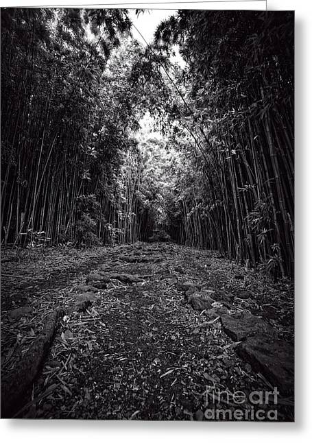 Pathway Through A Bamboo Forest Maui Hawaii Greeting Card by Edward Fielding