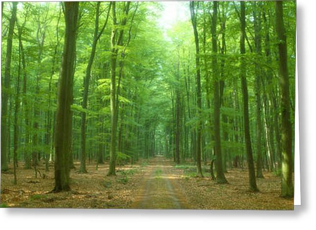 Pathway Through Forest, Mastatten Greeting Card