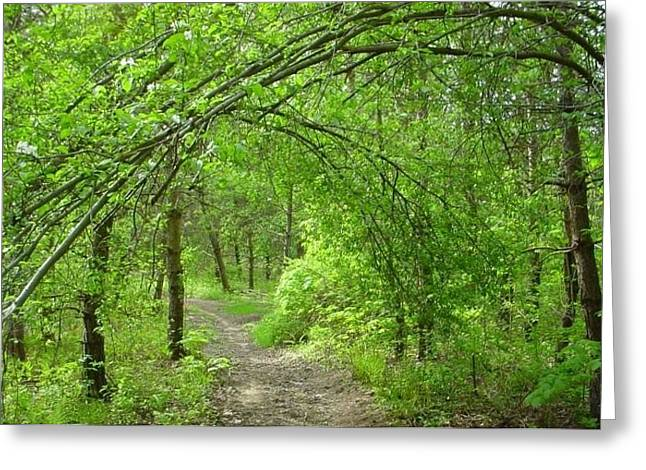 Pathway Through Nature's Bower Greeting Card