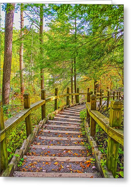 Pathway To The Falls  Greeting Card by SCB Captures