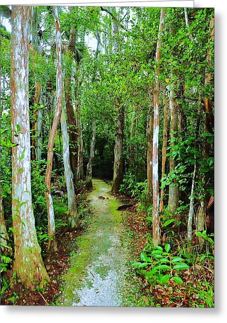 Pathway To The Rainforest Greeting Card by Kicking Bear  Productions