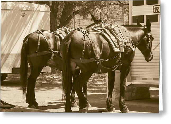 Patient Pack Mules Greeting Card