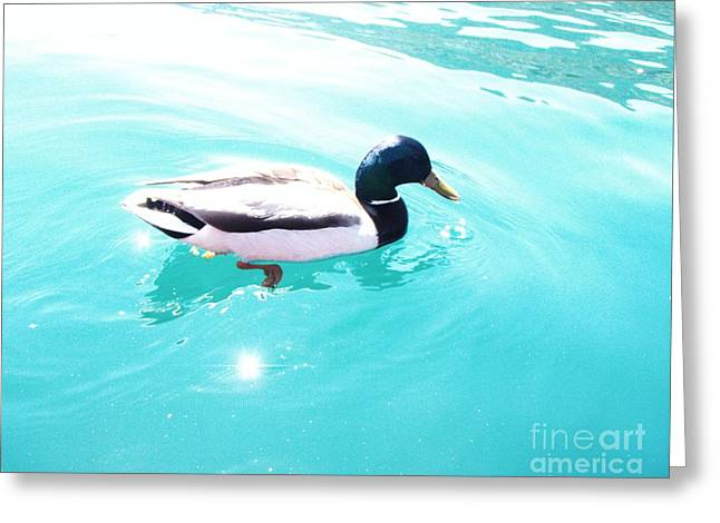 Pato Greeting Card