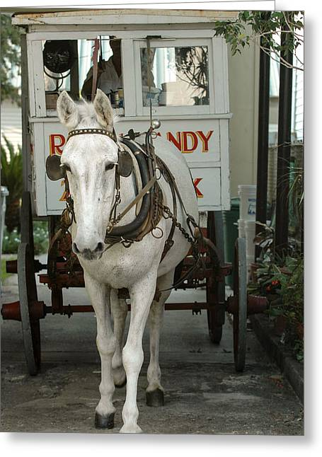 Patsy The Mule Greeting Card by Pam Kaster
