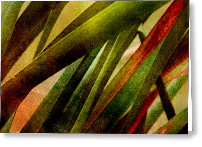 Patterns In Nature No.3 Greeting Card by Bonnie Bruno